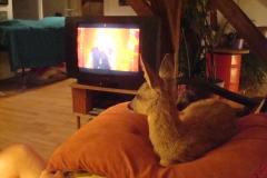 Fernsehen ist spannend